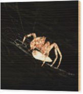 Orb Spider Wood Print