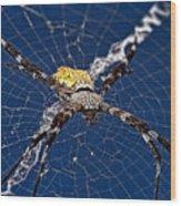 Orb-weaver Spider Wood Print