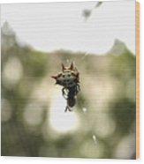 Orb Weaver Spider2 Wood Print