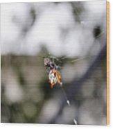 Orb Weaver Spider3 Wood Print