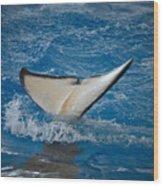 Orca 1 Wood Print