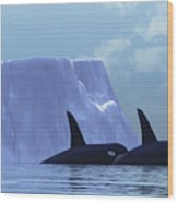 Orca Wood Print by Corey Ford