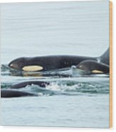 Orca Family Photo Wood Print