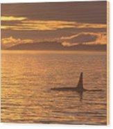 Orca Killer Whale Wood Print