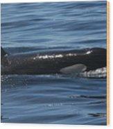 Orca Nw 2011 Wood Print