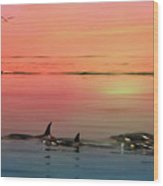 Orca Sunset Wood Print