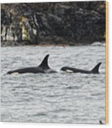 Orcas In The Salish Sea Wood Print