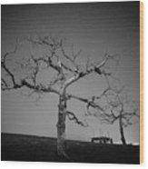 Orchard Bw Wood Print