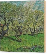 Orchard In Blossom Wood Print