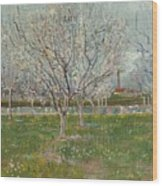 Orchard In Blossom Plum Trees Wood Print
