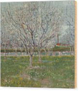 Orchard In Blossom, Plum Trees Wood Print