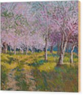 Orchard Light Wood Print
