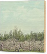 Orchard Of Apple Blossoming Tees Wood Print