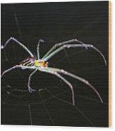 Orchard Orbweaver Spider Wood Print