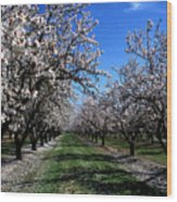 Orchard Trees Blossoming Wood Print