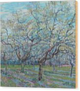 Orchard With Blossoming Plum Trees   Wood Print