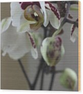 Orchid - 100 Wood Print