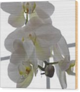 Orchid - 101 Wood Print