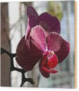 Orchid - 102 Wood Print