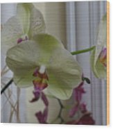 Orchid - 103 Wood Print