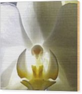 Orchid - The Wallflower Wood Print