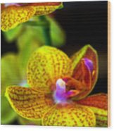 Orchid-0022 Wood Print