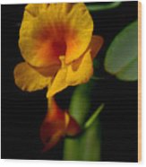 Orchid-0024 Wood Print