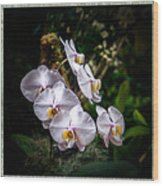Orchid 1 Triptych Wood Print