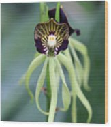 Orchid 10 Wood Print