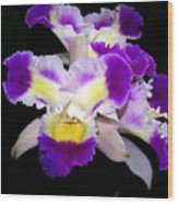 Orchid 13 Wood Print