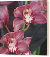 Orchid 14 Wood Print