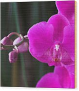 Orchid 18 Wood Print