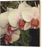 Orchid 19 Wood Print