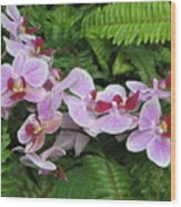 Orchid 2 Wood Print