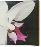 Orchid-2 Wood Print