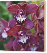 Orchid 20 Wood Print