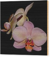 Orchid 2016 1 Wood Print