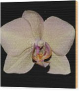 Orchid 2016 2 Wood Print