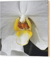 Orchid 23 Wood Print