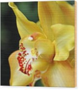 Orchid 24 Wood Print