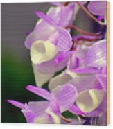Orchid 25 Wood Print