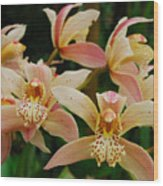 Orchid 255 Wood Print