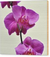 Orchid 26 Wood Print