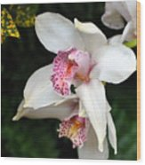 Orchid 29 Wood Print