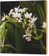 Orchid 3 Wood Print