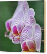 Orchid 30 Wood Print