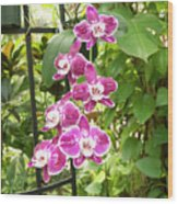 Orchid #4 Wood Print