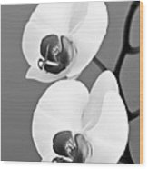 orchid-4- St Lucia Wood Print by Chester Williams