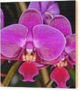 Orchid 422 Wood Print