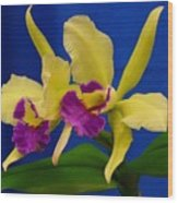 Orchid 7 Wood Print
